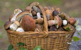 plný košík hub