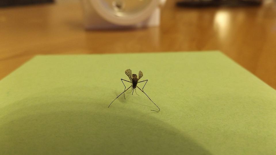 komár v bytě