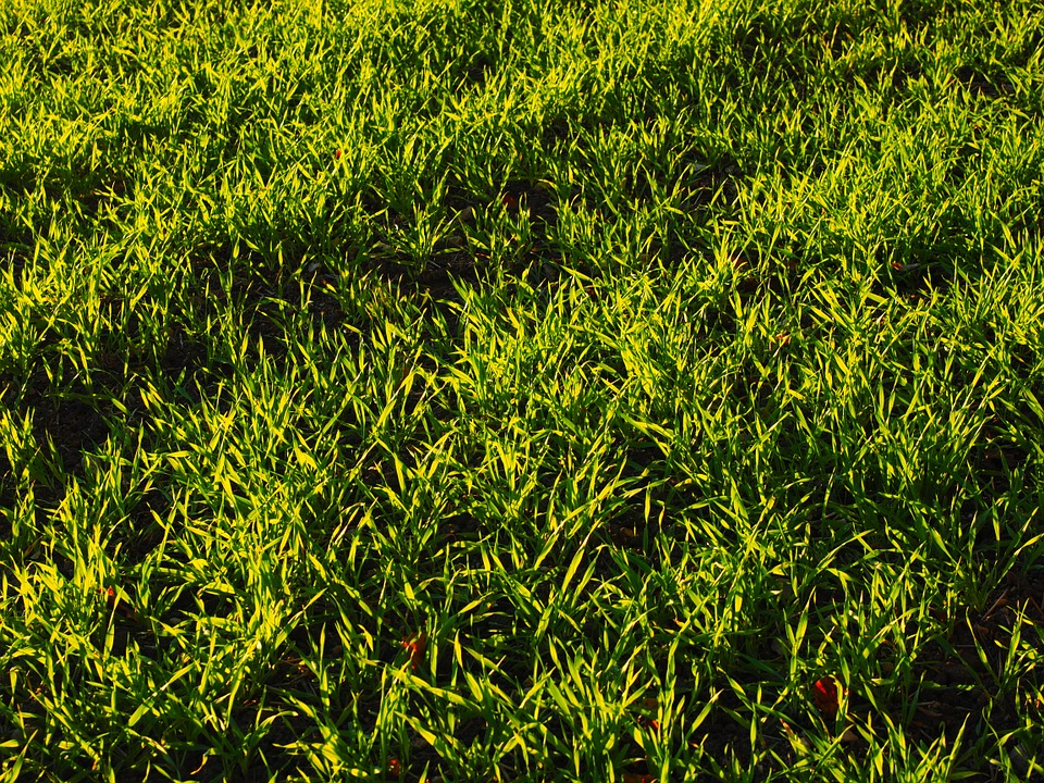 krásný zelený travní porost